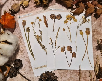 11 Piece Autumn Seed Pod  Sticker Sheets (a)   Fall Leaves   Scrapbook   Planner   Journal   Nature   Real Plant   Traveller Notebook
