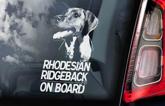 Rhodesian Ridgeback on Board - Car Window Sticker - African Lion dog Sign Decal - V01