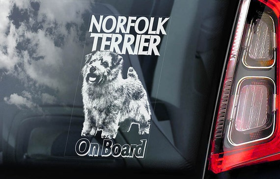 Norfolk Terrier on Board - Car Window Sticker - Working Dog Sign Decal - V01