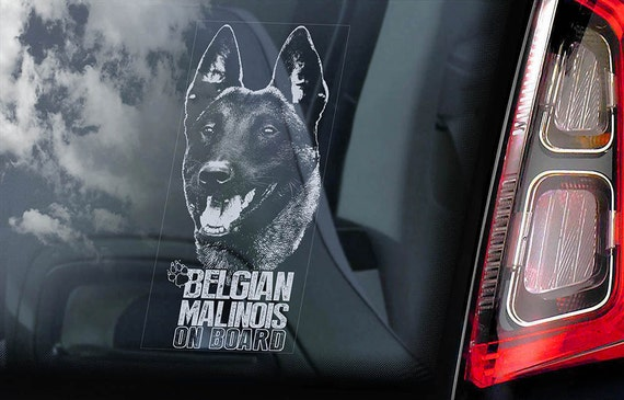Belgian Malinois on Board - Car Window Sticker - Mechelse Herder Security K9 Dog Sign Decal  -V20