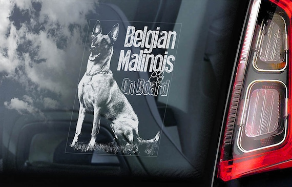 Belgian Malinois on Board - Car Window Sticker - Mechelse Herder Security K9 Dog Sign Decal  -V15