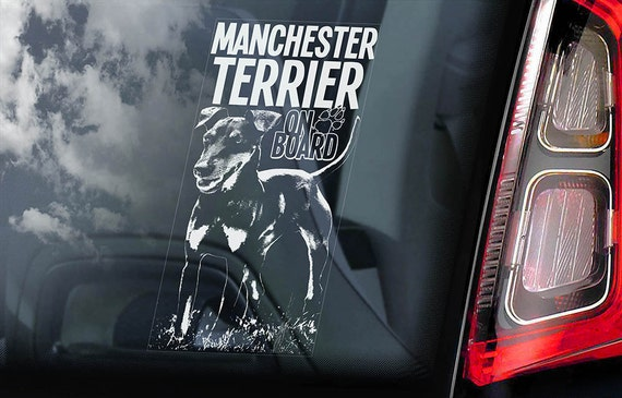 Manchester Terrier on Board - Car Window Sticker - Dog Sign Decal Gift - V01