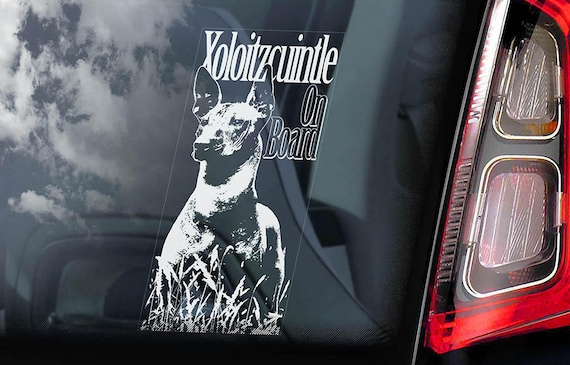 Xoloitzcuintle on Board - Car Window Sticker - Xolo Dog Sign Decal Mexican Hairless Dog Xoloitzcuintli - V01