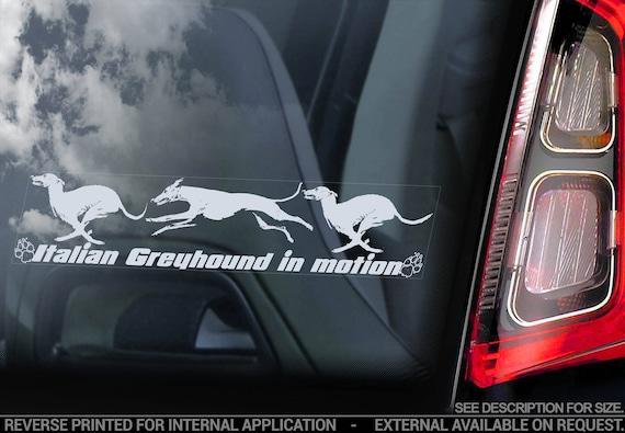 Italian Greyhound on Board  - Car Window Sticker - Levrette d'Italie Galgo italiano Dog Sign Decal  -V05