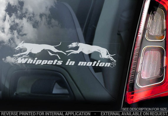 Whippets in Motion - Car Window Sticker - English Whippet Snap Dog on Board Sign Decal - V09