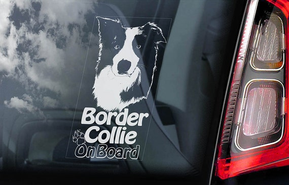 Border Collie on Board - Car Window Sticker - Dog Sign Scottish Sheepdog Decal  -V06