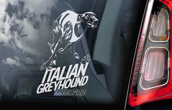 Italian Greyhound on Board  - Car Window Sticker - Levrette d'Italie Galgo italiano Dog Sign Decal  -V03