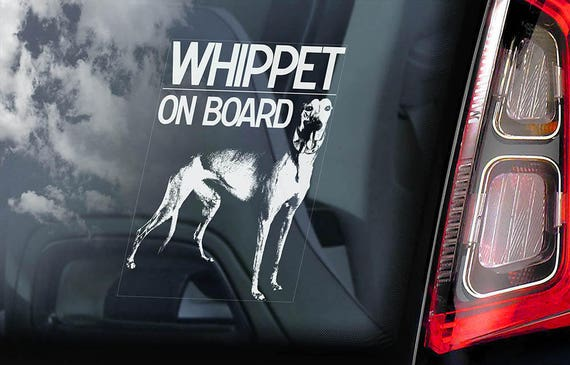 Whippet on Board - Car Window Sticker - English Snap Dog Sign Decal Rescue Gift - V01