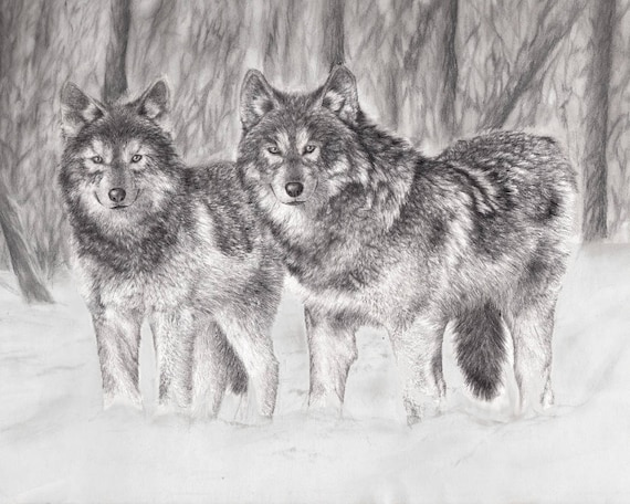 Impression Darchives Loups Crayon Noir Et Blanc Loup Etsy