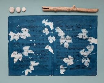 """Original cyanotype """"Wild hop"""" on old, double-sided sheets of music"""