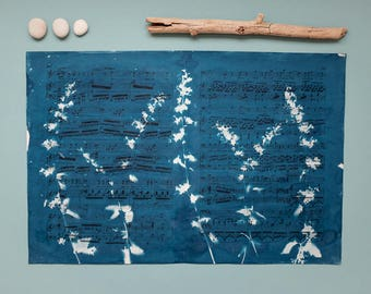 """Original cyanotype """"Cat mint"""" on old, double-sided sheets of music"""