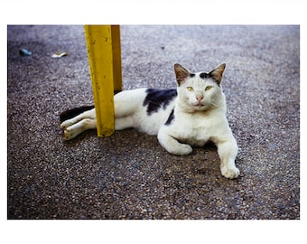 Kunstdruck 'Bequeme Katze' mit weißer Umrandung auf UV-Fotopapier (70x50cm)