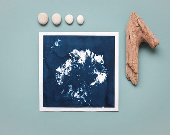"Original cyanotype ""Hydrangea flower umbel"" on Hahnemühle sketch paper in square format (21 x 21 cm)"