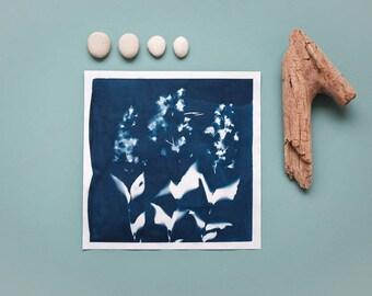 """Original Cyanotypie """"Zierliche Deutzie"""" auf Hahnemühle Skizzenpapier im quadratischen Format (21 x 21 cm)"""
