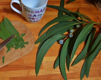 1 Kg Fresh Eucalyptus Leaves or branches, wild, organic, chemical-free, perfect fo tea