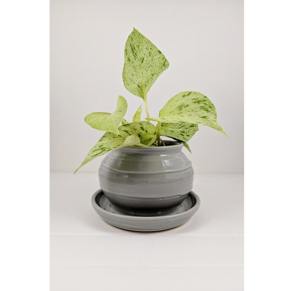 Table Top Planter and Attached Saucer