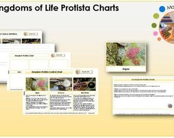 Six Kingdoms Protista Chart & Labels Printable Package