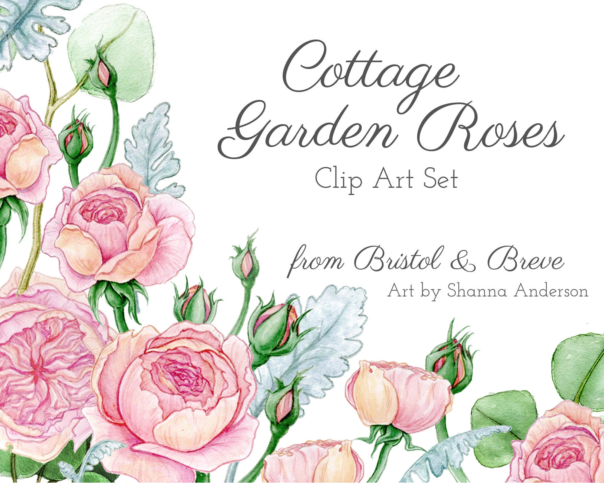 Cottage Garden Roses Clip Art Set Etsy