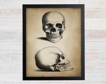 Antique Skull Print. Skull Art. Skull Decor. Vintage Anatomy Art. Anatomy Print. Anatomy Poster. Science Art. Science Gift. Anatomy Gift