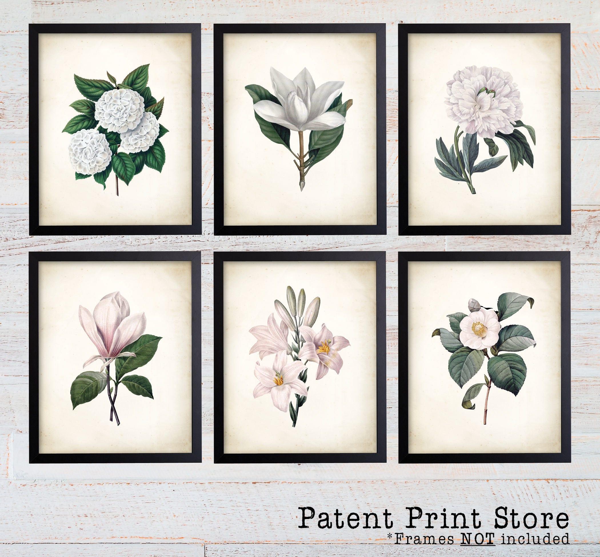 White Botanical Art Prints White Flower Prints Flower Wall Art