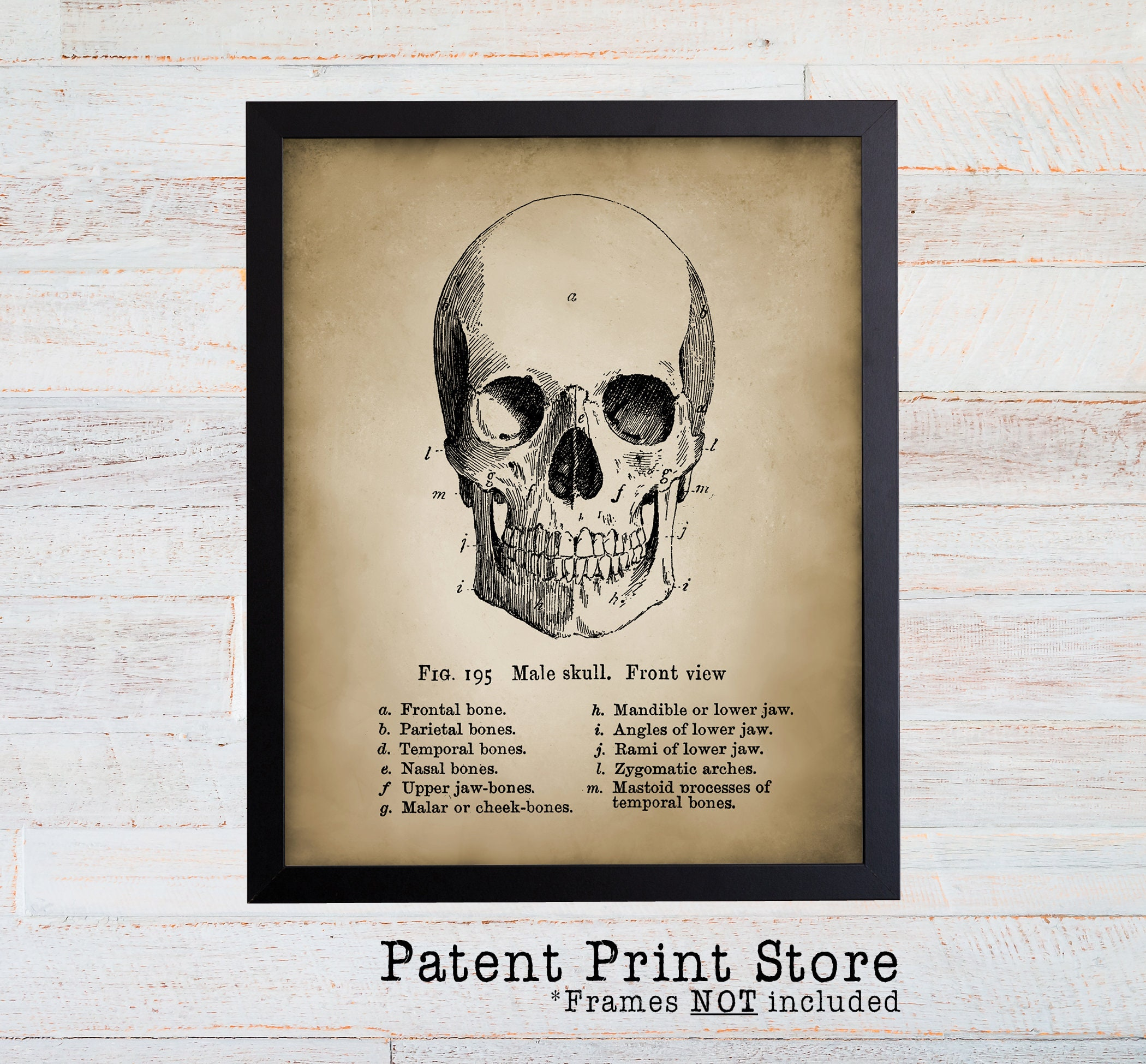 Vintage Human Skull Art Print Antique Anatomy Wall Art Human