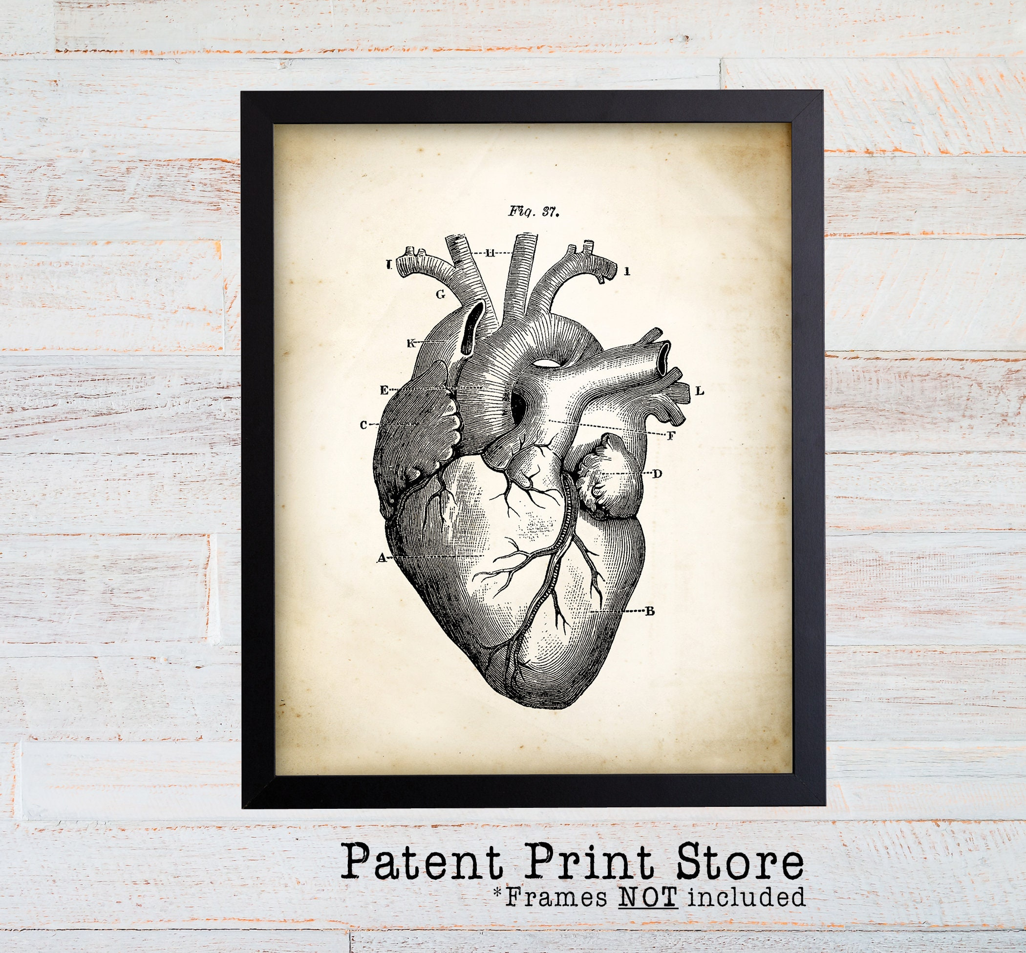 Anatomical Heart Print, Human Heart Anatomy Print, Heart ...