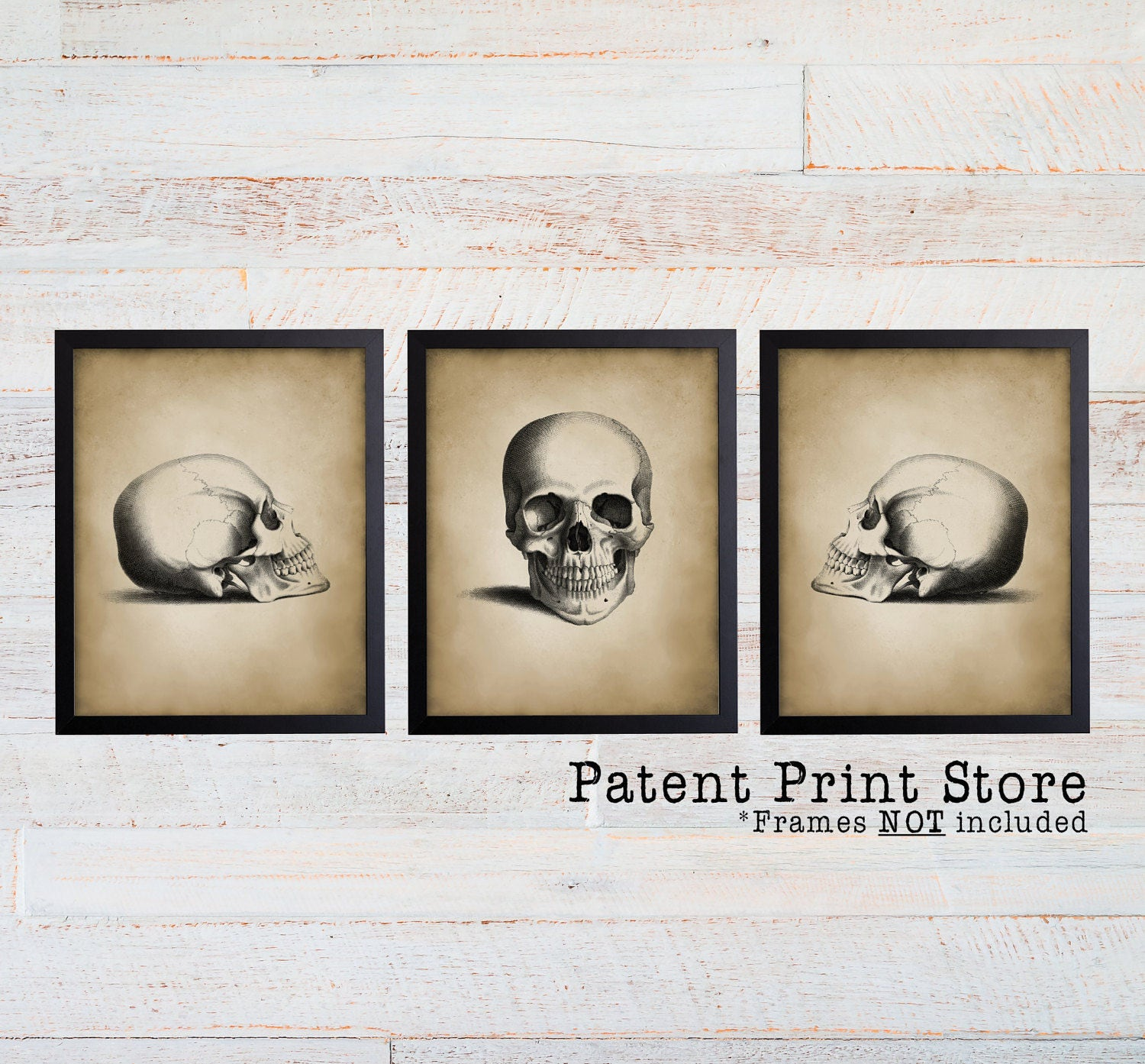 Antique Skull Print Set. Skull Art. Skull Decor. Vintage Anatomy Art ...