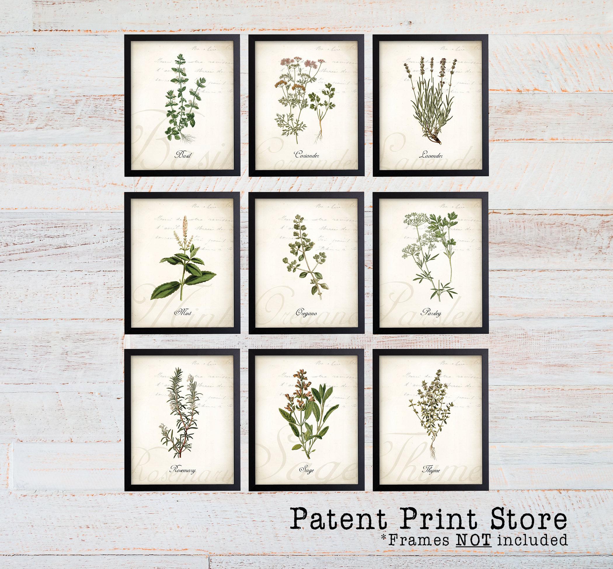 Kitchen Art Prints   Vintage Herb Botanical Art Prints Herb Prints Herb Art Herb Etsy