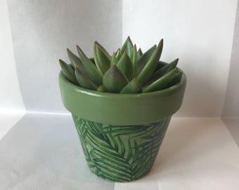 Green Palm Leaf Succulent Cactus Terracotta Plant Pot 10cm