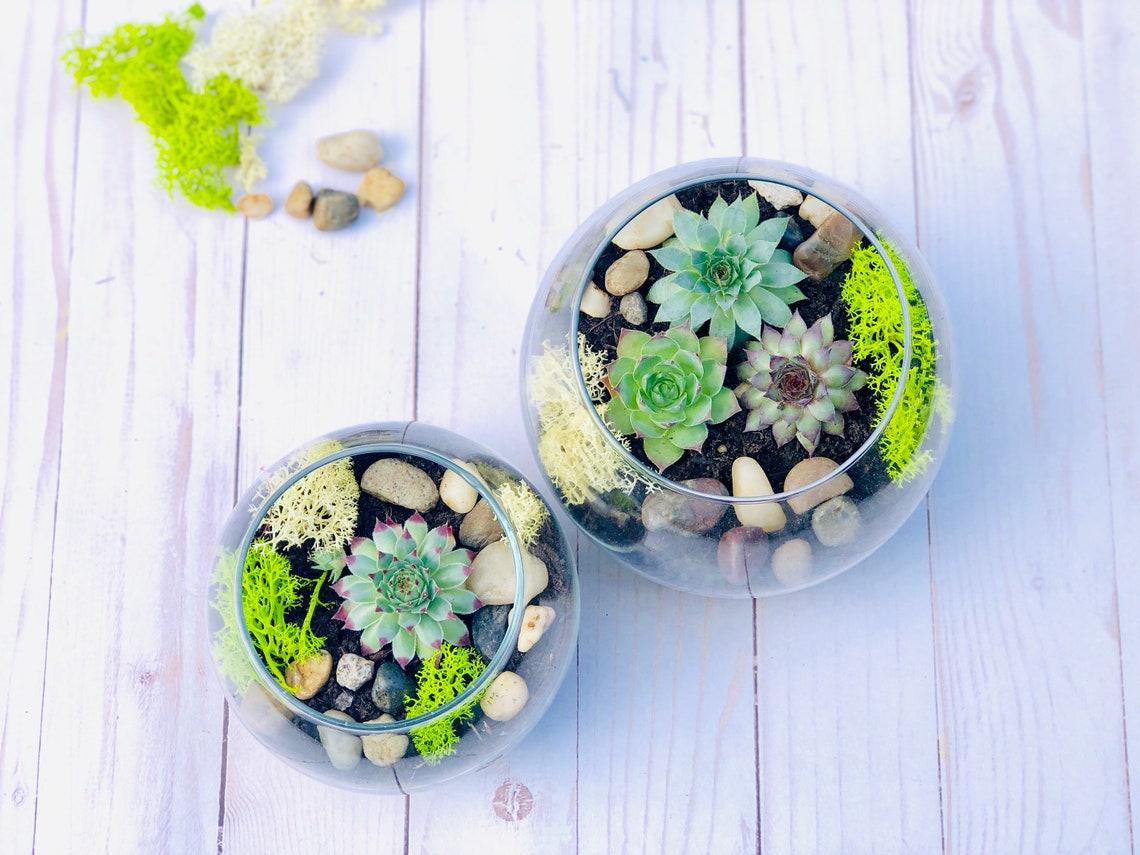 Complete Terrarium kit Cactus Terrarium Kit Chartreuse DIY image 0