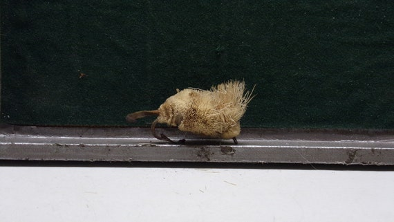 """Mouse vintage fishing lure with leather tail  2"""" long 1950s"""