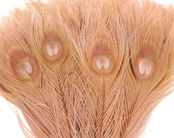 Peacock Feathers, 5 to 100 Pieces, Dusty ROSE Bleached Dyed Tails, Peacock Eye Feathers ZUCKER® USA Store