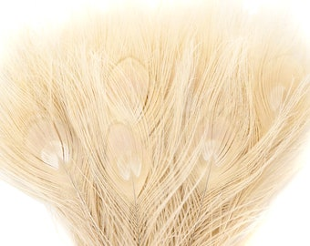 Peacock Feathers, 5 to 100 Pieces, IVORY Cream Bleached Dyed Tails, Peacock Eye Feathers ZUCKER® USA Store