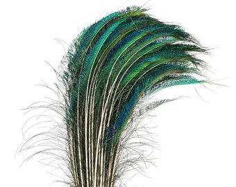 """Peacock Sword Right Side Tail, 100 Pieces 25-30"""", Natural Peacock Sword Feathers, Sanitized in USA ZUCKER®"""