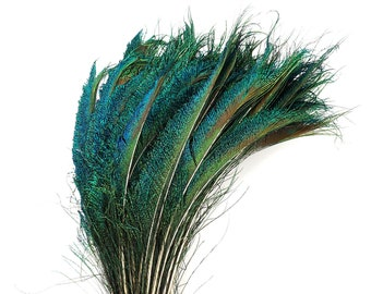 "Peacock Sword Right Side Tail, 100 Pieces 12-20"", Natural Peacock Sword Feathers, Sanitized in USA ZUCKER®"