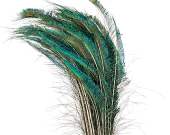 """Peacock Sword Left Side Tail, 100 Pieces 25-30"""", Natural Peacock Sword Feathers, Sanitized in USA ZUCKER®"""