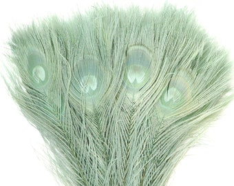 Peacock Feathers, 5 to 100 Pieces, CELEDON, Seafoam Green Bleached Dyed Tails 8 to 15 inches, Peacock Eye Feathers ZUCKER® USA Store