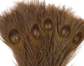 Peacock Feathers, 5 to 100 Pieces, BROWN Bleached Dyed Tails 8 to 15 inches, Peacock Eye Feathers ZUCKER® USA Store