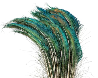 "Peacock Sword Left Side Tail, 100 Pieces 12-20"", Natural Peacock Sword Feathers, Sanitized in USA ZUCKER®"