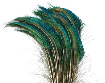 """Peacock Sword Left Side Tail, 100 Pieces 20-25"""", Natural Peacock Sword Feathers, Sanitized in USA ZUCKER®"""
