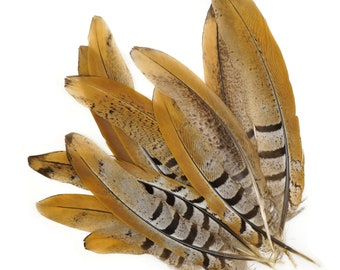 """Venery Pheasant Tail Feathers 6-8"""", 12 pcs Natural Brown Stripe Pheasant Feathers For Millinery, Fashion, Cultural Arts & Jewelry ZUCKER®"""