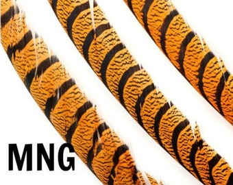MANGO Dyed Lady Amherst Pheasant Center Tail Feathers 3PC/PKG - For Millinery, Carnival and Cultural Arts Costume Design ZUCKER®