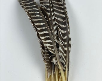 "Wild Turkey Feathers, Natural Barred Turkey Pointers 10-16"" for Writing Quills, Millinery, Dream Catchers, Arts & Crafts, Costumes  ZUCKER®"