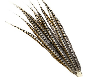 "Tail Feathers, Long Natural 30-35"" Lady Amherst Pheasant Feathers For Millinery, Fashion, Cultural Arts & Carnival Costume Design ZUCKER®"