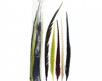 "HARVEST 16-30"" Dyed Ringneck and Golden Pheasant Tail Feathers 25pc/pkg - Assorted Colors for Millinery, Carnival and Cultural Arts ZUCKER®"
