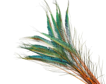 "ORANGE 10pc/pkg 15-25"" Stem Dyed Peacock Sword Feathers - For Arts & Crafts, Floral Decor, Millinery and Jewelry Design ZUCKER®"