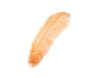 "12 CINNAMON 17""+ Ostrich Feathers 1DZ - Perfect for Large Feather Centerpieces, Party Decor, Millinery, Carnival & Costume Design ZUCKER®"