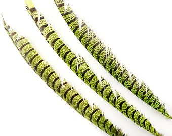 """Lime Pheasant Tail Feathers, 20-40"""" Lady Amherst Pheasant Center Tail Feathers 3 pieces Carnival Costume Design & Cultural Arts  ZUCKER®"""