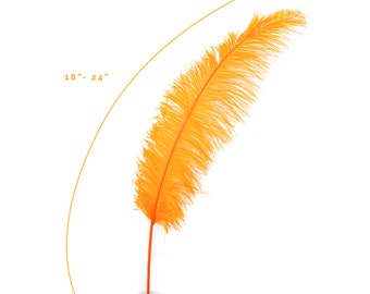"Ostrich Feathers, Orange Ostrich Feather Spads 18-24"", Centerpiece Floral Supplies, Carnival & Costume Feathers ZUCKER®"