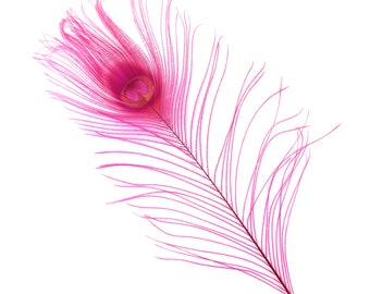"SHOCKING PINK 25pc/pkg 8-15"" Bleach Dyed Peacock Tail Feathers - Bleach Dyed Short Peacock Eye Tail Feathers ZUCKER®"